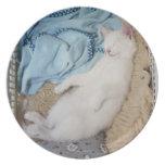 Un gato blanco que duerme en una cesta de lavadero plato