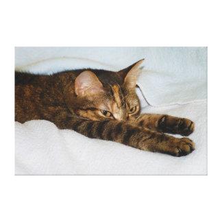Un gato de Tabby que estira el Felis Silvestris Ca Impresiones De Lienzo