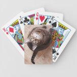 Un gato de tabby que mira para arriba baraja cartas de poker