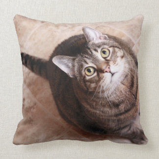 Un gato de tabby que mira para arriba cojin