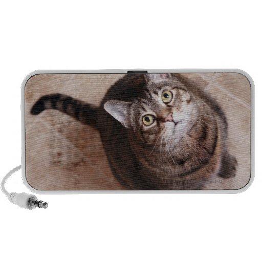 Un gato de tabby que mira para arriba iPhone altavoces