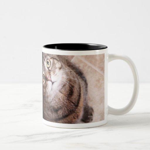 Un gato de tabby que mira para arriba taza de dos tonos