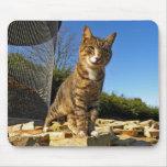 Un gato en el reloj Mousepad Alfombrillas De Ratones