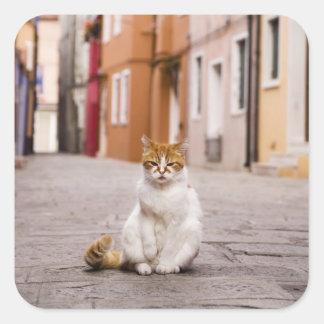 Un gato en las calles de Burano, Italia.  2006. Pegatina Cuadrada
