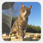 Un gato en los pegatinas del reloj calcomania cuadradas personalizada