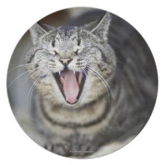 Un gato que bosteza, Suecia Plato De Comida