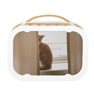 Un gato que se sienta detrás de las cortinas en