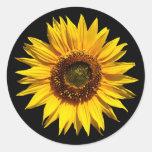 Un girasol amarillo grande etiquetas redondas