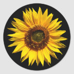 Un girasol amarillo grande pegatina redonda