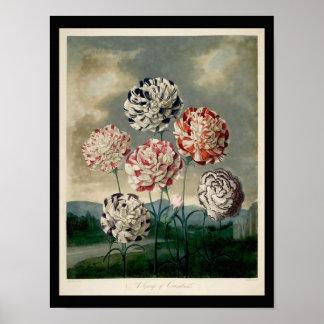 Un grupo de claveles - el templo de la flora 1 poster