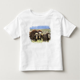 Un grupo de muskoxen hojea en arbustos del sauce playera de bebé