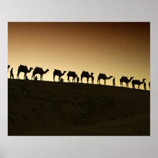 Un grupo de pastores del camello con sus camellos  póster