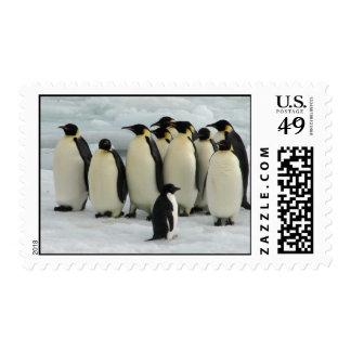 Un grupo de pingüinos franqueo