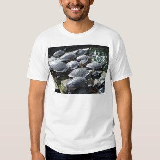 Un grupo de tortugas de agua playera