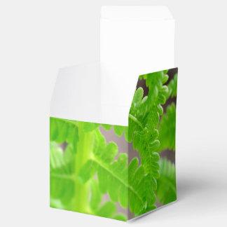Un helecho en tiempo de primavera caja para regalos de fiestas