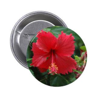 Un hibisco rojo pin