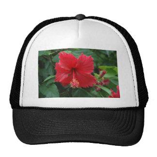 Un hibisco rojo gorra