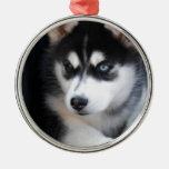 Un husky siberiano hermoso 2 del ojo azul adornos de navidad