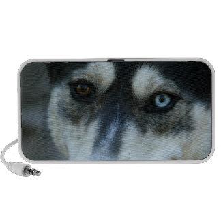 Un husky siberiano hermoso del ojo azul altavoz