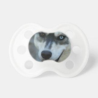 Un husky siberiano hermoso del ojo azul chupetes para bebés
