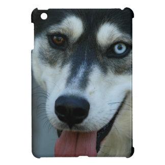 Un husky siberiano hermoso del ojo azul