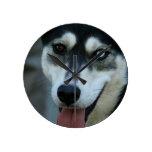 Un husky siberiano hermoso del ojo azul relojes