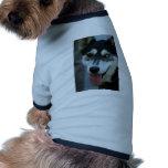 Un husky siberiano hermoso del ojo azul camisa de perrito