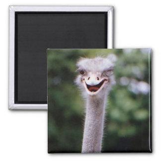 Un imán feliz del refrigerador de la avestruz