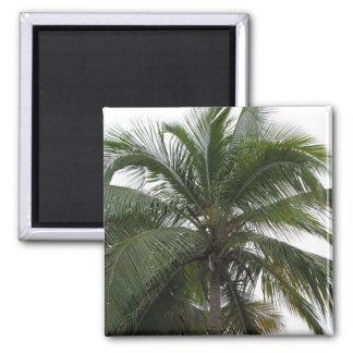 Un imán hermoso de la palmera