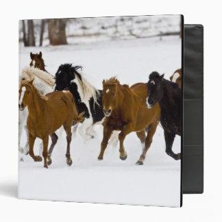 """Un invierno escénico de caballos corrientes en carpeta 1 1/2"""""""