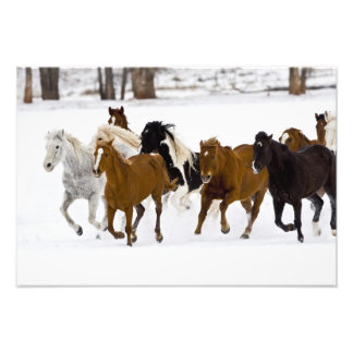 Un invierno escénico de caballos corrientes en cojinete