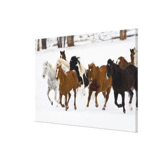 Un invierno escénico de caballos corrientes en lienzo envuelto para galerías