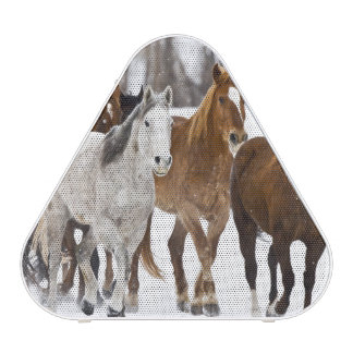 Un invierno escénico de caballos corrientes en los altavoz bluetooth