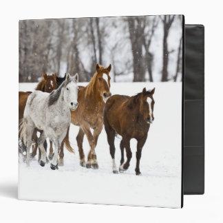 """Un invierno escénico de caballos corrientes en los carpeta 1 1/2"""""""