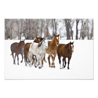 Un invierno escénico de caballos corrientes en los cojinete