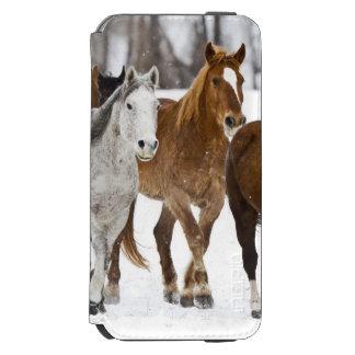 Un invierno escénico de caballos corrientes en los funda billetera para iPhone 6 watson