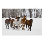 Un invierno escénico de caballos corrientes en los posters
