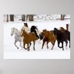 Un invierno escénico de caballos corrientes en póster