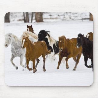 Un invierno escénico de caballos corrientes en alfombrilla de ratones