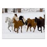 Un invierno escénico de caballos corrientes en tarjeta