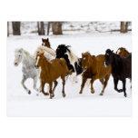 Un invierno escénico de caballos corrientes en tarjeta postal