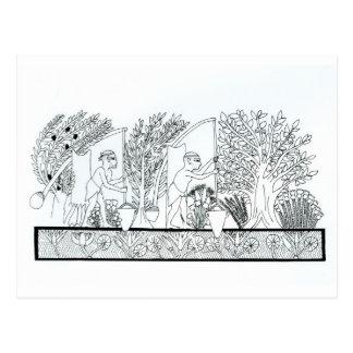 Un jardín egipcio antiguo (grabado) (foto de b/w) postales