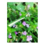 Un jardín minúsculo 1 postal