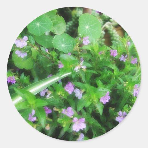 Un jardín minúsculo 2 pegatina