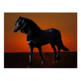 Un jugueteo de la puesta del sol de los caballos tarjetas postales