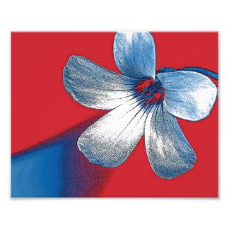Un juguetón corrige de una pequeña flor fotografía