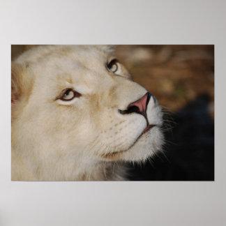 Un león apacible póster
