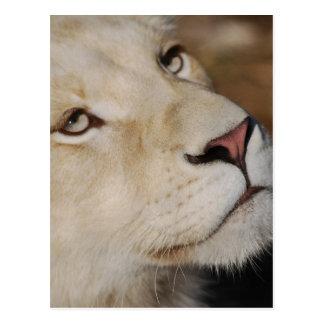Un león apacible postal
