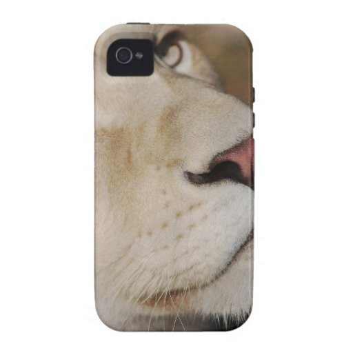 Un león apacible vibe iPhone 4 carcasa