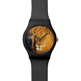 Un león crinado rojo que mira la cámara reloj de mano